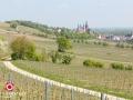 FB-20140413-Schlemmerwanderung-FB136247